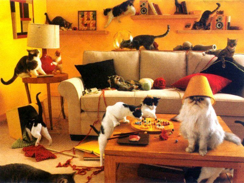 Koľko mačiek je na obrázku? Hádanka nielen pre najmenších