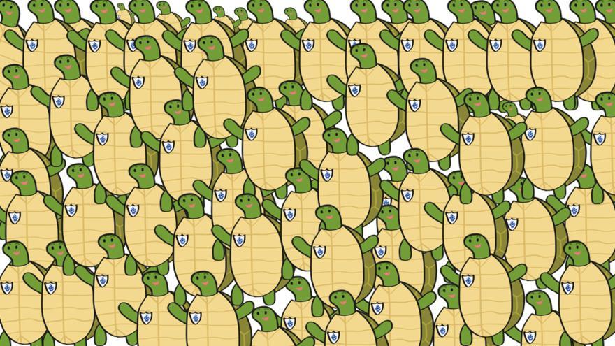 Koľko korytnačiek vidíš?