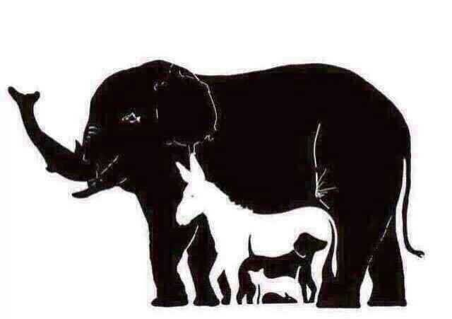 Pozorne si prezrite obrázok. Vidíte slona, somára? Ale čo ostatné zvieratá. Koľko zvierat je na obrázku?
