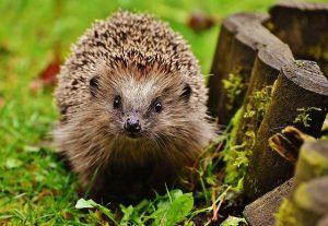 V detských hádankách nájdeme aj zvieratká zo záhradky