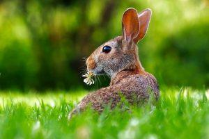 Detské hádanky v sebe samozrejme ukrývajú aj zvieratká z lesa